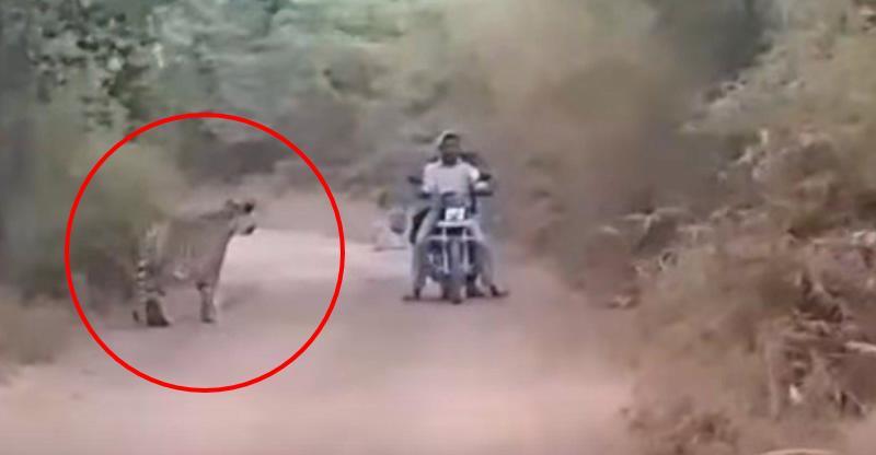 Tigers बनाम Bikers; मौत से कुछ यूँ हुआ सामना…
