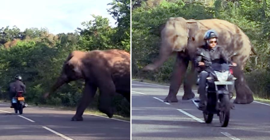 गुस्साया हाथी Bajaj Discover चालक और autorickshaw पर हमला करता दिखाई दिया [वीडियो]
