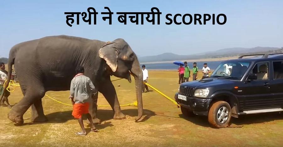 देखिये कैसे एक हाथी इस फँसी हुई Scorpio को खींच निकालता है…