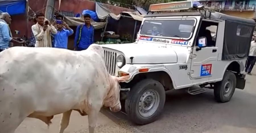 पुलिस की Mahindra Thar पर सांड ने किया हमला, जीता कौन? [विडियो]