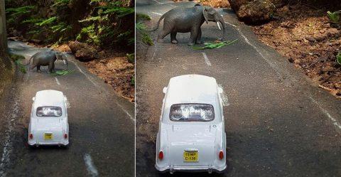 Elephant Amby Featured