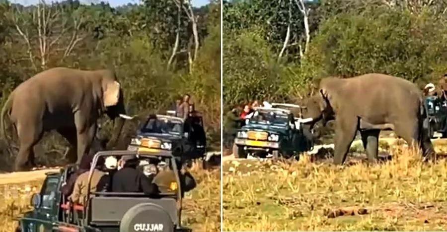 देखिये कैसे हाथी ने किया एक Maruti Gypsy पर डरावना हमला
