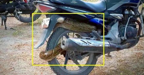 Honda Unicorn Snake Featured
