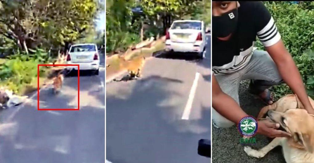 2 किलोमीटर तक कुत्ते को घसीटने के बाद केरल ड्राइवर गिरफ्तार, कार जब्त