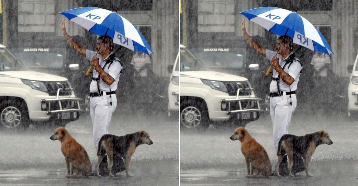 कोलकाता ट्रैफिक पुलिस कांस्टेबल ने बारिश में अपने छत्र के नीचे आवारा कुत्तों को शरण दी: तारीफ बटोरी